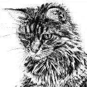 Cat Scale 4