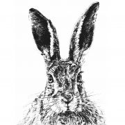 Solemn Hare Scale 4