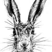 Sassy Hare Scale 1