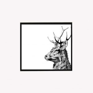 Imperial Stag 10 x 10 print white - Copy