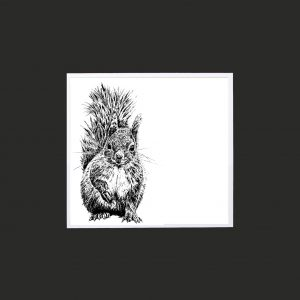 Squirrel 10 x 10 print black