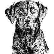 Labrador Scale 1