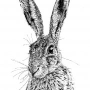 Shy Hare Scale 1 cropped