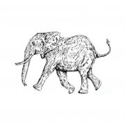 Elephant Running b&w 001