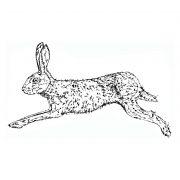 Hare Running b&w 001