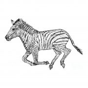 Zebra Running b&w 001