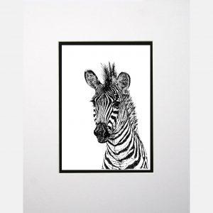 LE zebra white